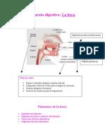 Funciones de la boca