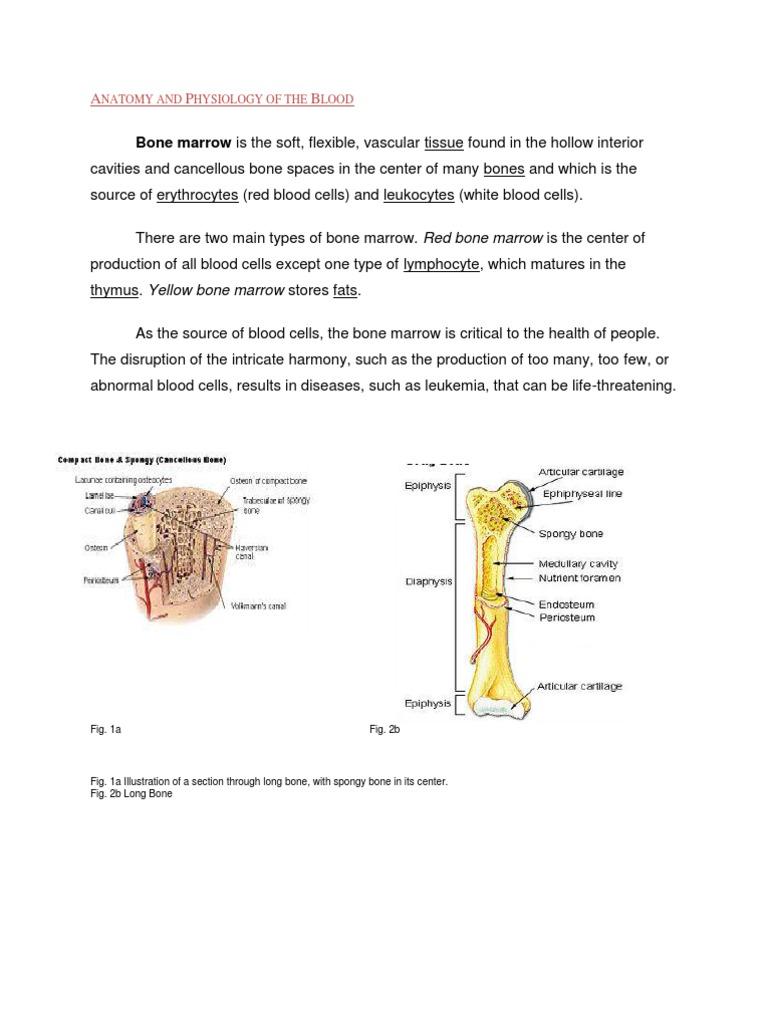 Anaphysio Blood | Bone Marrow | Blood Cell