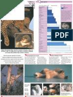 Wildlife Fact File - Animal Behavior - Pgs. 1-10