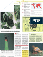 Wildlife Fact File - Insects & Spiders - Pgs. 61-70
