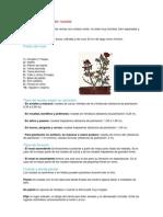 Cómo plantar y podar rosales