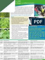 Plantas Biocidas