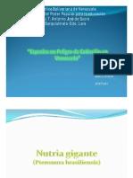 ESPECIE_EN_PELIGRO_DE_EXTINCION_EN_VENEZUELA.pdf