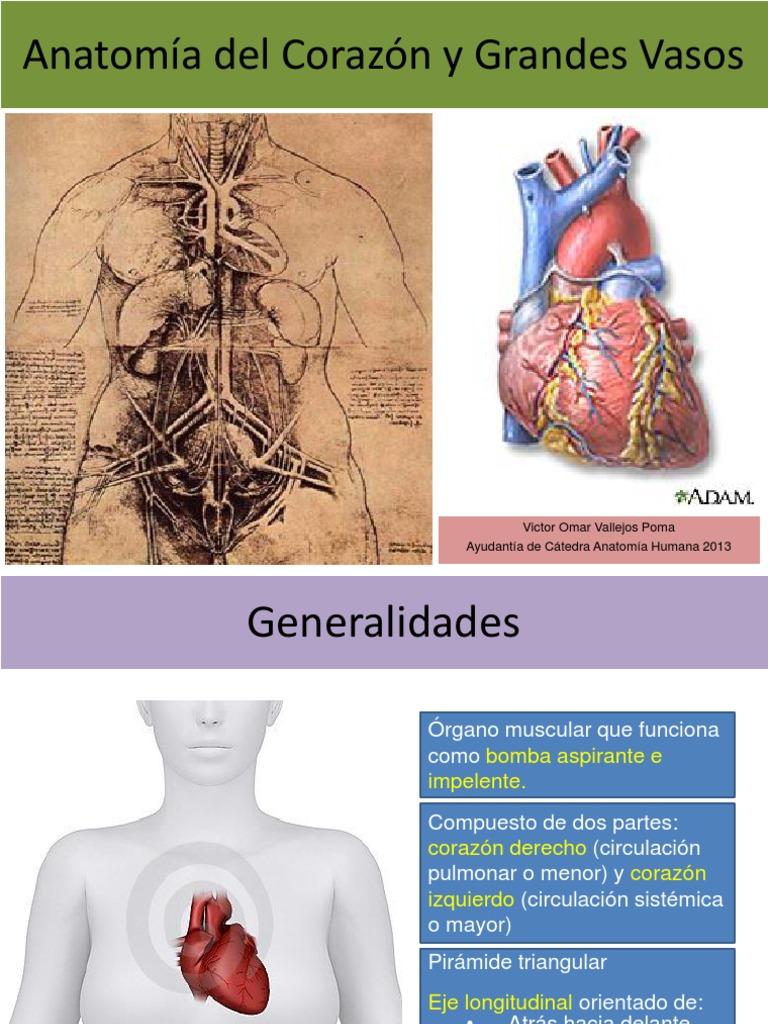 Excepcional Anatomía Regional Frente A La Anatomía Sistémica ...