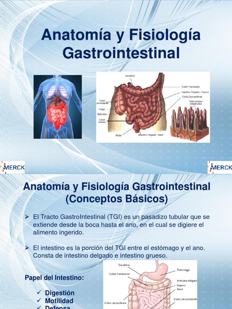 Anatomía y Fisiología Gastrointestinal