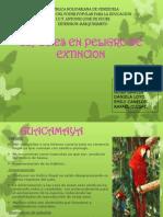 Animales en Peligro de Extincion.