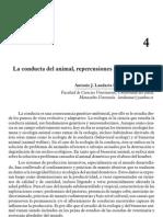 La Conducta Del Bovino Repercusiones y Aplicaciones