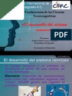 El desarrollo del sistema nervioso. Exposición.