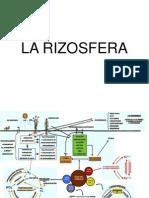 La Rizosfera Power Point