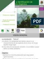 4-Produccion y Certificacion de Oregano Organico - Copia
