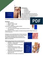 Samenvatting vorm en functie relaties.pdf