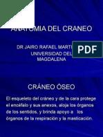 Anatomia Del Craneo1