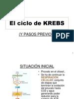 Ciclo de Kreps