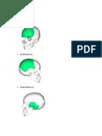 Human Bones.docx