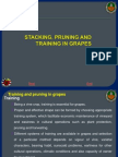 Staking prunning and cutting of grapes