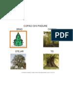 Copaci Din Padure