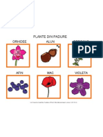 Plante Din Padure
