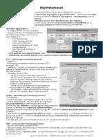 Hipotalamusul