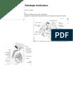 patologie testiculara