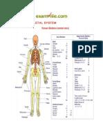 Examville.com - HUMAN SKELETAL SYSTEM