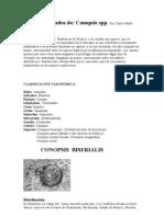 Ficha de Cuidados de Conopsis