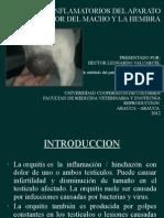 procesos inflamatorios del aprato reproductor del macho y la hembra