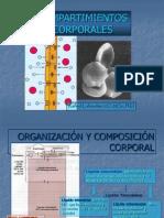 Fisiologia, Compartimientos Corporales