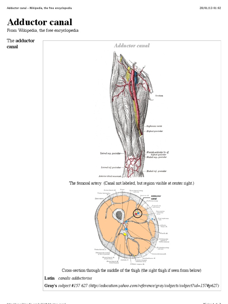 Adductor Canal Wikipedia The Free Encyclopedia Musculoskeletal