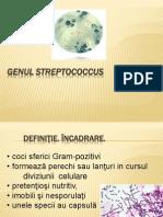 Streptococcus Lp