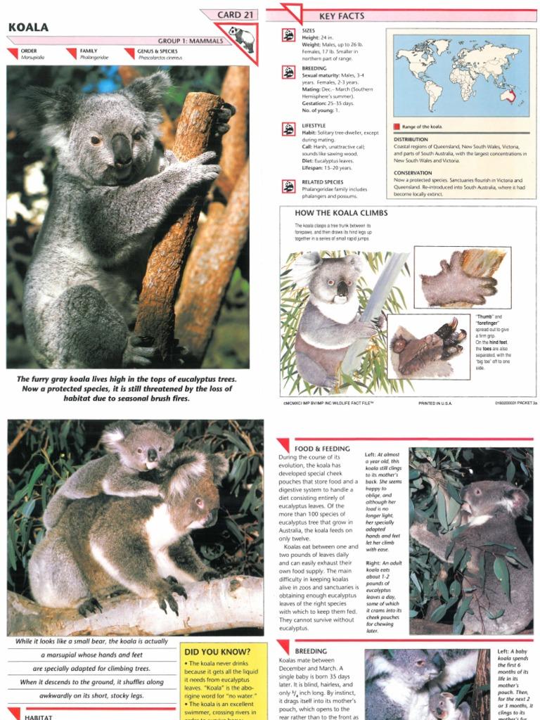 Wildlife Fact File - Mammals - Pgs  21-30 | Moose | Giraffe