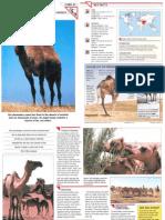 Wildlife Fact File - Mammals - Pgs. 51-60