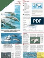 Wildlife Fact File - Mammals - Pgs. 61-70