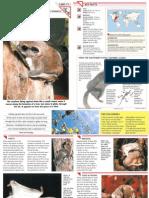 Wildlife Fact File - Mammals - Pgs. 71-80