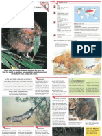 Wildlife Fact File - Mammals, Pgs. 131-140