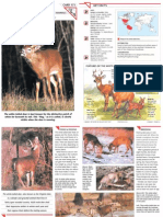 Wildlife Fact File - Mammals, Pgs. 171-180