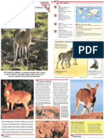 Wildlife Fact File - Mammals - Pgs. 261-270