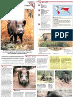 Wildlife Fact File - Mammals  Pgs. 281-290