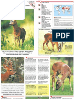 Wildlife Fact File - Mammals  Pgs. 291-300