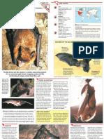 Wildlife Fact File - Mammals  Pgs. 311-320