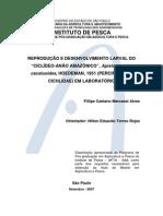 2007 - Reprodução e desenvolvimento larval do Ciclídeo-Anão Amazônico, Apistogramma cacatuoides, Hoedeman, 1951 (Perciformes-Cichlidae) em laboratório