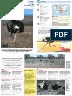 Wildlife Fact File - Birds - 21-30