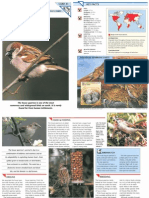 Wildlife Fact File - Birds - 41-50