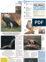 Wildlife Fact File - Birds - Pgs. 91-100