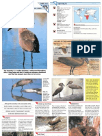Wildlife Fact File - Birds - Pgs. 131-140