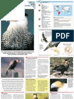Wildlife Fact File - Birds - Pgs. 191-200