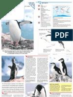 Wildlife Fact File - Birds - Pgs. 281-290