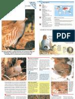 Wildlife Fact File - Birds - Pgs. 291-300