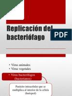 Replicación del bacteriófago