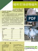 集约化畜牧业与农场动物福利