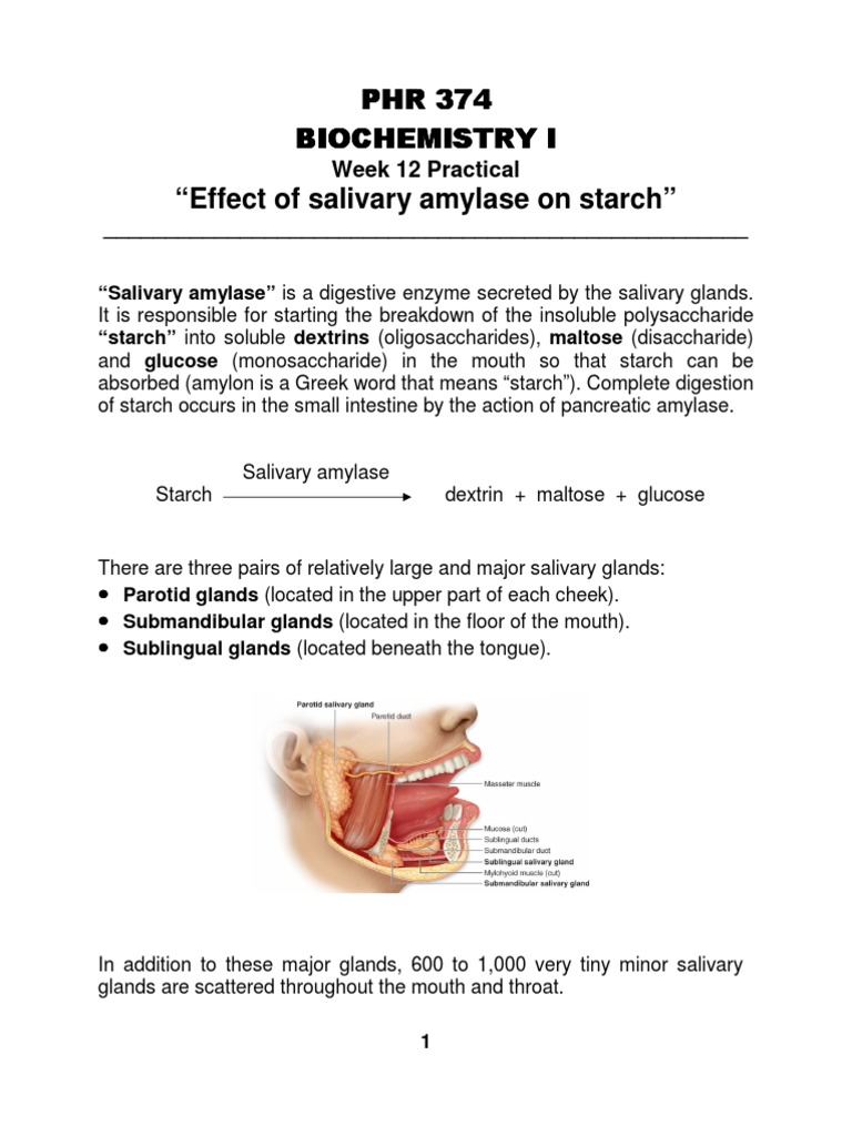 effect of amylase on starch